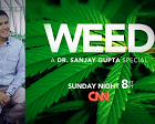 CNN Whistleblower Apologizes for Misleading the Public About Cannabis